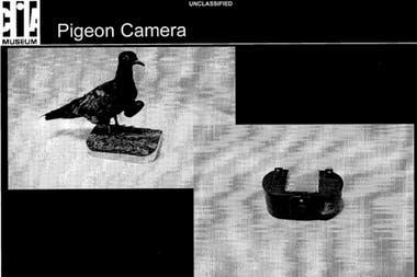 ЦРУ экспериментировало с голубями, оснащенными камерами для шпионажа