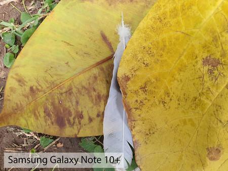 Samsung Galaxy Note 10plus Макро День 01