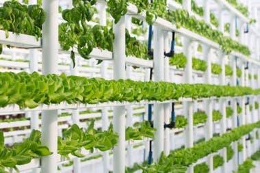 Одна из возможностей - выращивать растения в воде, а не в почве.